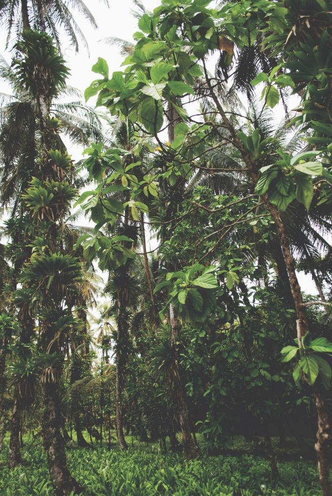 PANAMA_BOCASDELTORO_7_ROT