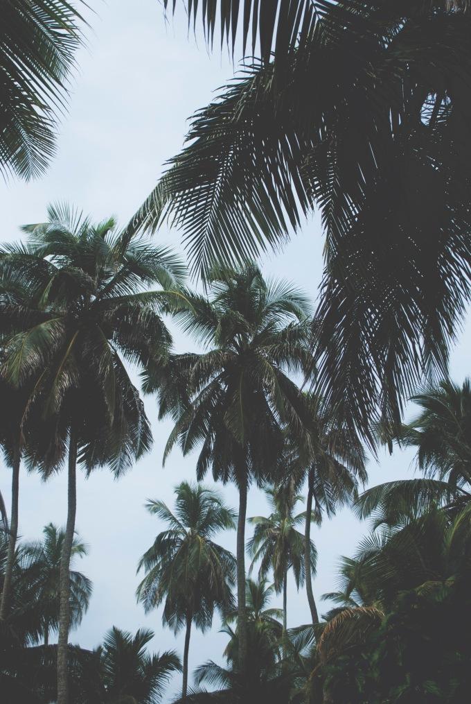 PANAMA_SANBLAS_25_ROT