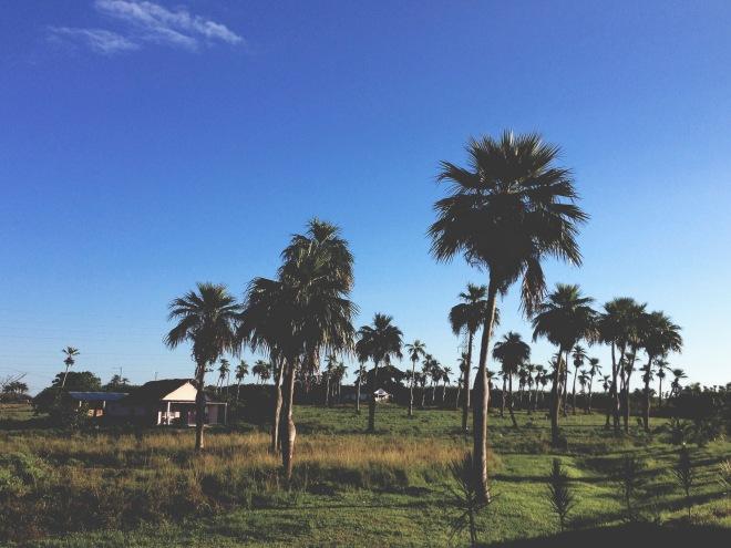 ROT_CUBA_VINALES_01