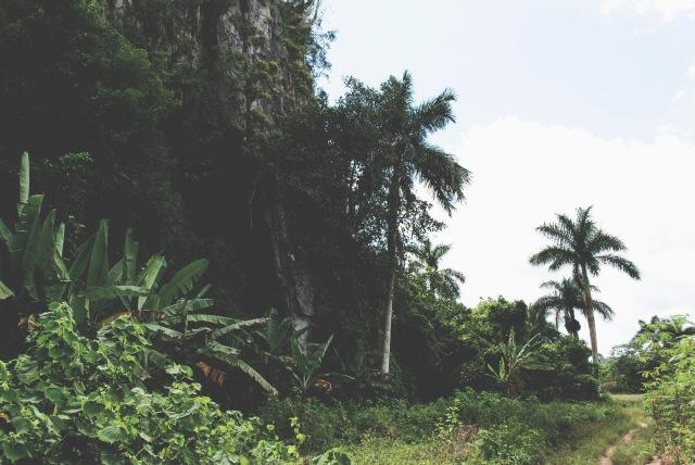 ROT_CUBA_VINALES_1