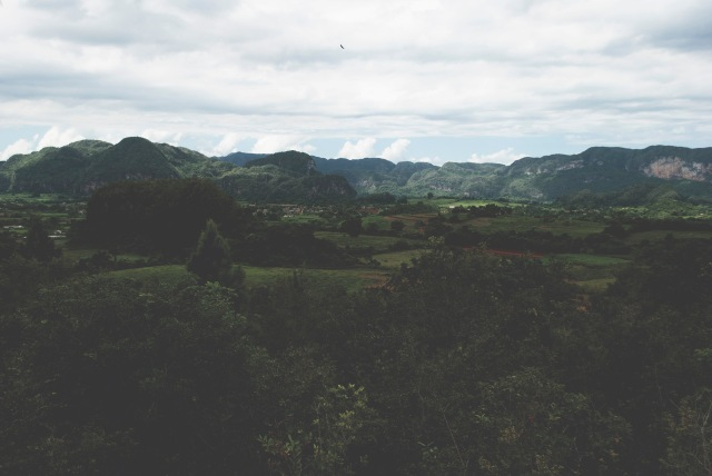 ROT_CUBA_VINALES_11