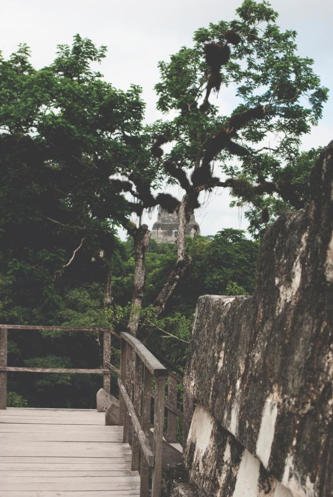 GUATEMALA_TIKAL_24