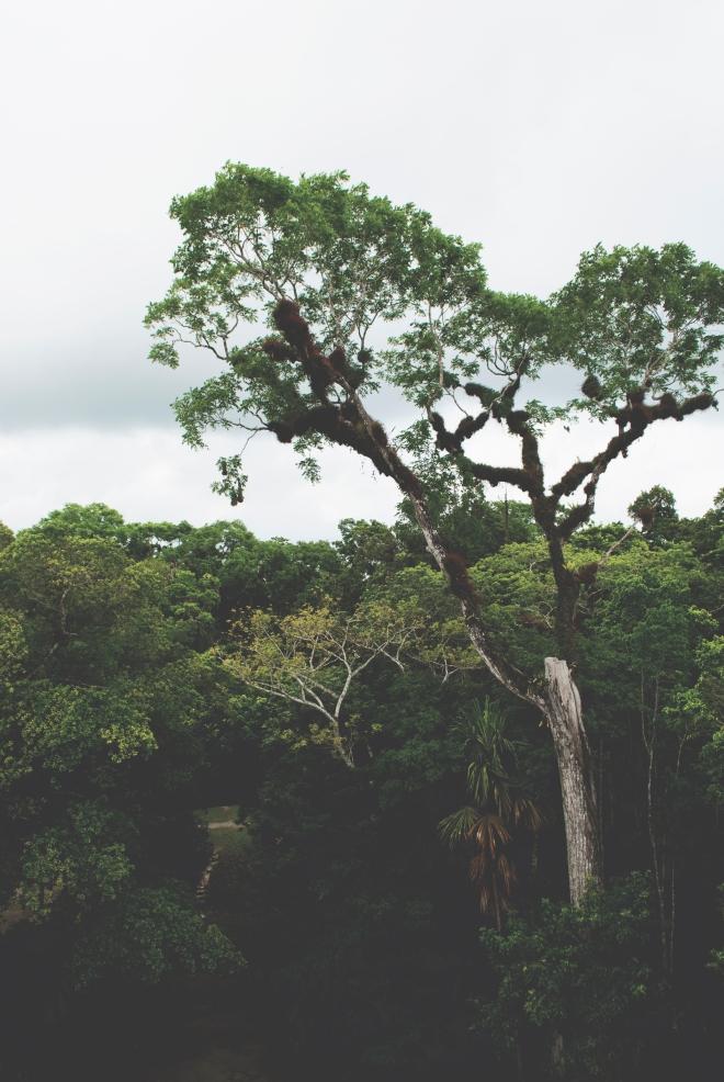 GUATEMALA_TIKAL_26